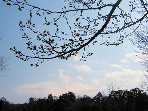 こぶし咲くも桜の拳硬く