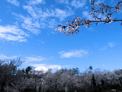 春の空と富士桜
