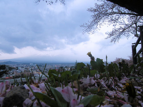 散る散る桜が下に満ちる