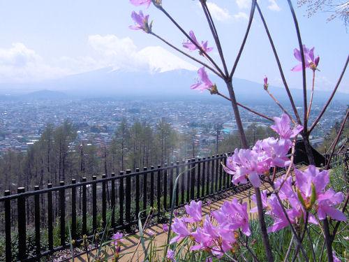 薄紫と富士山