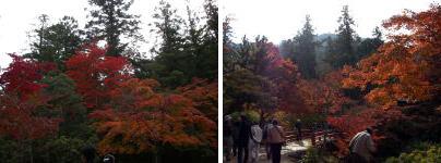 miyajima-0271.jpg