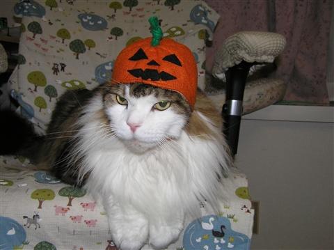 今度はかぼちゃかよ