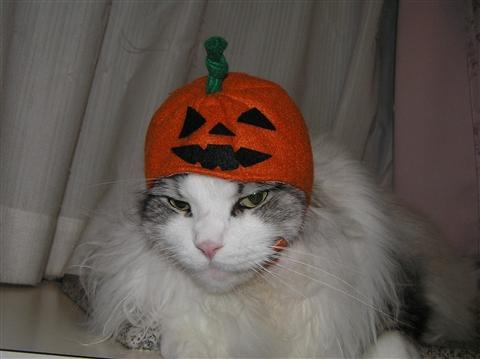 えーーー、ボクかぼちゃはいやにゃ~