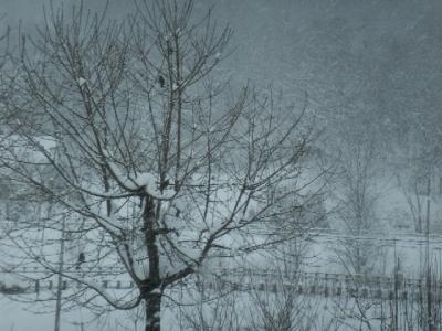 裏の木の小鳥