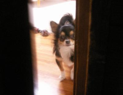 ドアの隙間から・・