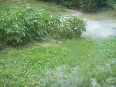 大雨が降った畑
