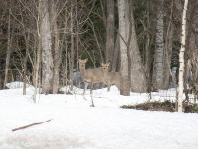 途中で見かけた鹿!