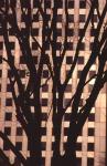 樹木とビル-27P 94t