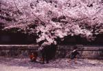 桜-03P 94Y3q