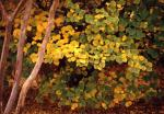 樹の葉-08Pqc