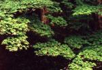 樹の葉-09Pqc