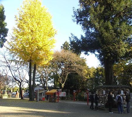 ichou tree washimiya jinjya ema 20081122