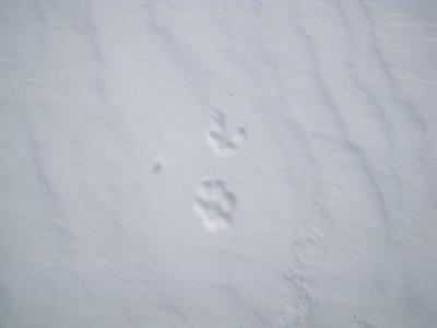 狸それとも狐