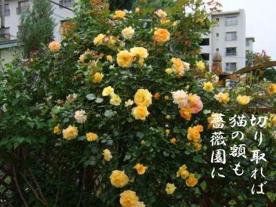 photo5754