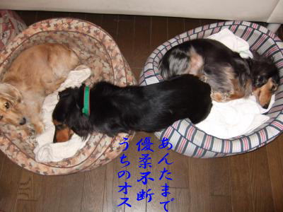 photo5751_20090804092644.jpg