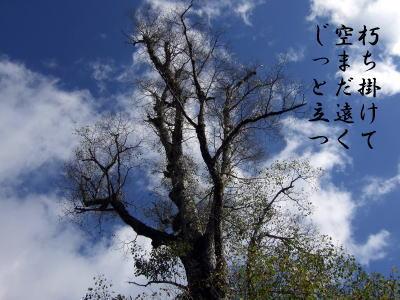 photo95871.jpg