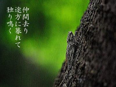photosemi.jpg