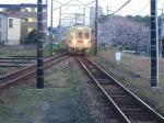 満開の桜の中西鉄古賀駅に入る電車