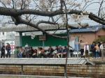 桜と津屋崎の待ち人