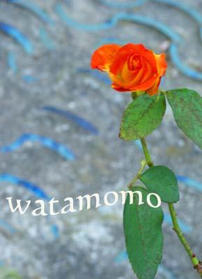 蜜柑色の薔薇