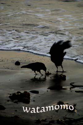 海辺のカラス