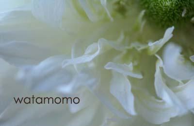 アネモネ2