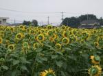 himawari-1.jpg