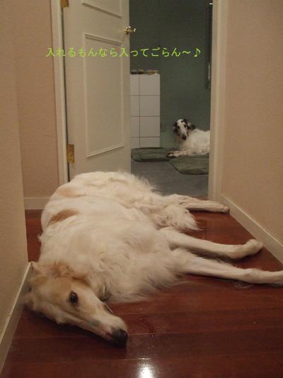 バスルーム6