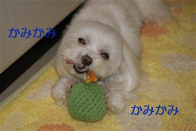 DSC00103_R.jpg
