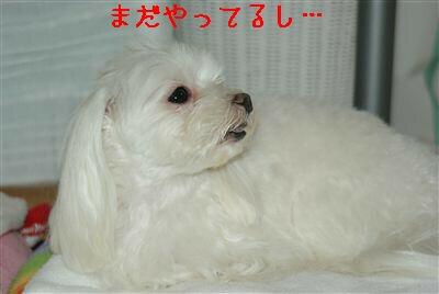 DSC00574_R-1.jpg
