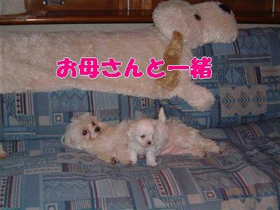 DSCF0046_R_R.jpg