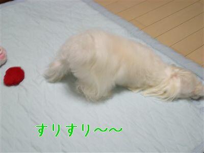 DSCN0624_R.jpg