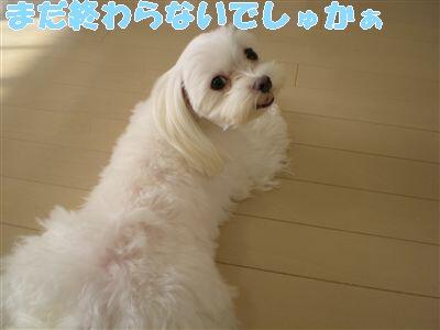 DSCN7966_R.jpg