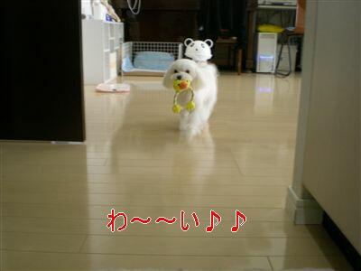 DSCN8336_R.jpg