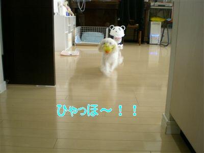 DSCN8337_R.jpg