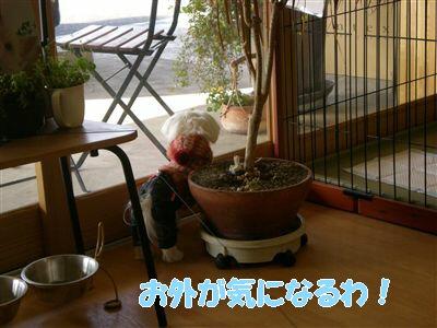 DSCN9297_R.jpg