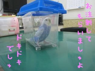 IMG001_0564.jpg