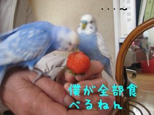 IMG006_0581.jpg