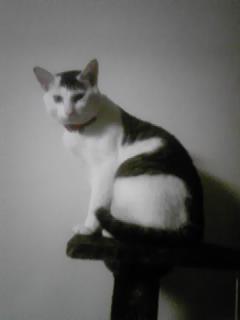 yukicat