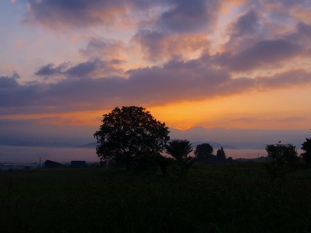 夜明けの木