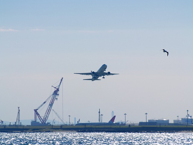 ウミウと飛行機ー2