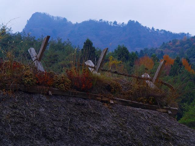 野鳥の森ー4