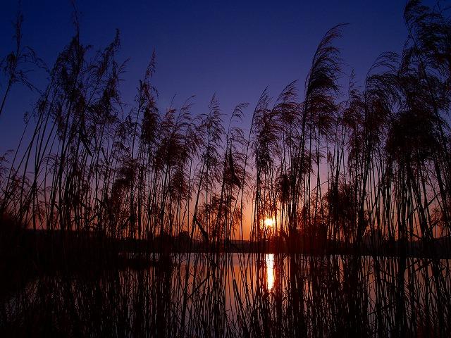 日の出の相模川