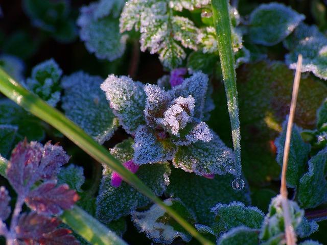 相模川の霜