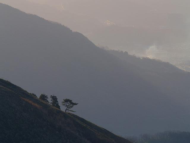 南斜面の木