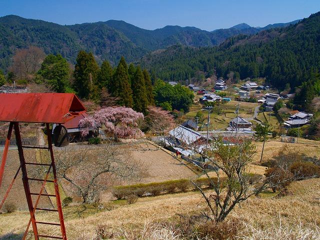 s-iyppP4067024城の山桜の風景