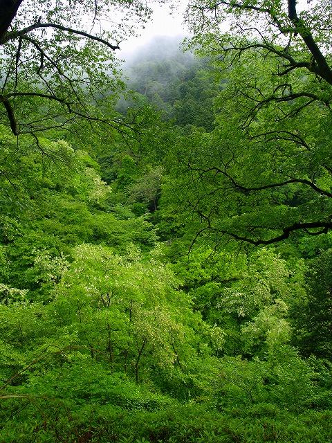 s-iyppP5237763箱根の森