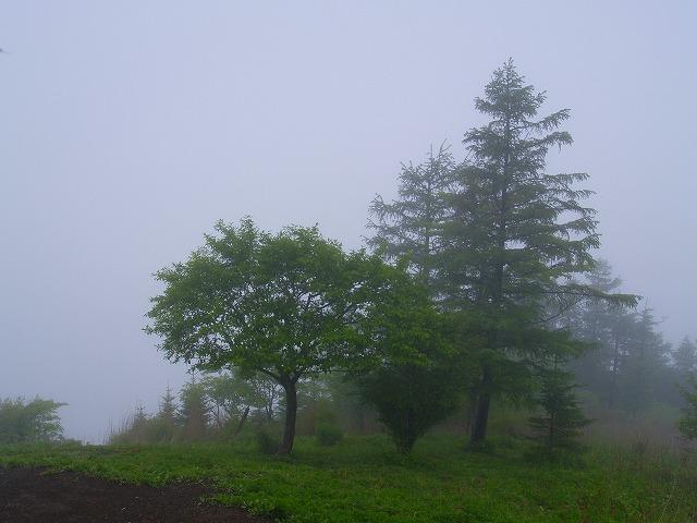 s-iyppP5307929霧の頂上