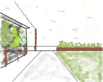 トンボの花道