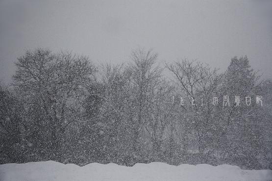 実家の雪1